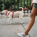 6 Ways to Keep City Dogs Healthy